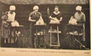angora konijnen 1927 The HAP